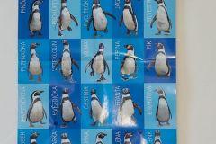 Tučňáci 2- zima 2021