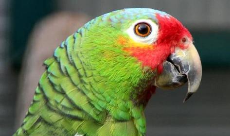 Papoušek 2019